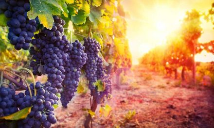 Wine tours and tastings