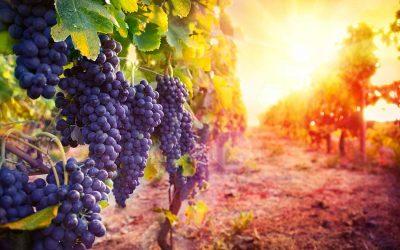 Wine tour e degustazioni