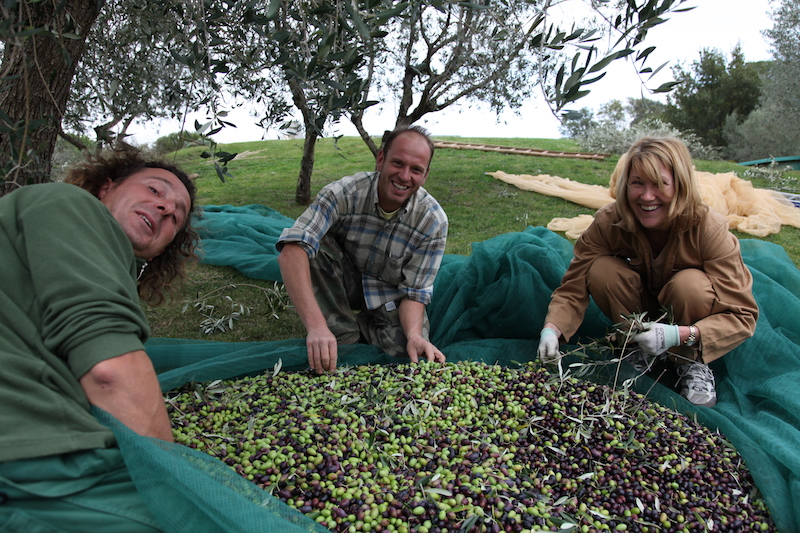 Our olive harvest in Montisi
